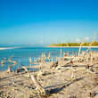 Exotic view of the Gulf of Mexico on the island Holbox — Stock Photo #27679349