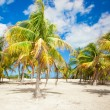 Palm grove on the sandy tropical beach at exotic country — Stock Photo #27679477