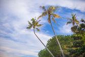 Coconut palm tree op het zandstrand in filippijnen — Stockfoto