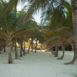Palm grove on the exotic tropical beach — Stock Photo