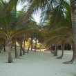 Palm grove on the exotic tropical beach — Stock Photo #29290203