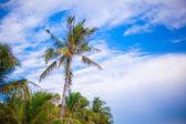Albero di palme di cocco sulla spiaggia di sabbia nelle filippine — Foto Stock