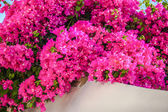 Beautiful bougainvillea on the old traditional White House in Emporio Santorini, Greece — Stock Photo