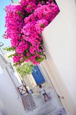 Beautiful cobbled streets with bougainvillea on the old traditional White House in Emporio Santorini, Greece — Stock Photo