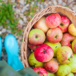 Top view of Straw basket with red apples and bright rubber boots at the grass — Stock Photo