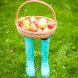 Straw basket with red and yellow apples is on bright rubber boots at the grass — Stock Photo
