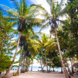 Tropical sunny beach in beautiful exotic resort — Stock Photo