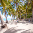 Palm grove on the sandy tropical beach with family of three — Stock Photo