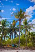 кокосовой пальмы на песчаном пляже в филиппины — Стоковое фото