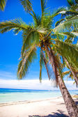 Tropical beach with beautiful palms and white sand — Stock Photo