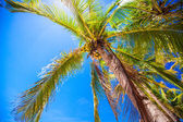 Coconut Palm tree on the sandy beach — Stock Photo