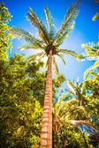 Coconut Palm tree on the sandy beach — 图库照片