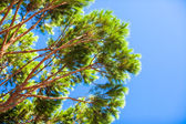Big green tree on background blue sky — Stock Photo