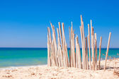 Dry fence of reeds on a deserted coast in Faro, Portugal — Stock Photo