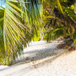 Stock Photo: Exotic white beach at tropical island