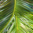 Close-up Large palm leaves — Stock Photo