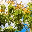 Deciduous trees in exotic countries — Stock Photo