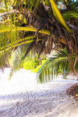Exotic white beach at tropical island — Stock Photo