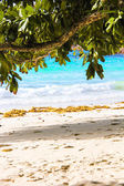 Exotic tropical beach with turquoise water — Stock Photo