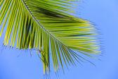 Large palm leaf on background blue sky — Stock Photo