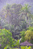Strong tropical rain in the Seychelles — Stock Photo
