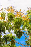 Deciduous trees in exotic countries — Foto Stock