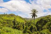 Palm tree on tropical island at Seyshelles — Stock Photo