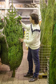 Young man choose Christmas tree in the market — Stock Photo