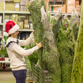 Young man buying green Christmas tree in the market — Stock fotografie