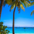 Coconut Palm tree on the sandy beach in exotic island — Stok fotoğraf