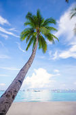 Coconut Palm tree on the sandy beach background blue sky — 图库照片