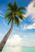 Coconut Palm tree on the sandy beach background blue sky — Stock Photo