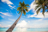 Coconut Palm tree on the sandy beach background blue sky — Foto de Stock