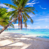 Coconut Palm tree on the white sandy beach — Stock Photo