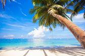 Coconut palm tree op de zandstrand achtergrond blauwe hemel — Stockfoto