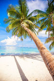 Coconut Palm tree on the white sandy beach — Foto de Stock