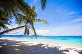 Coconut Palm tree on the white sandy beach — Stock fotografie
