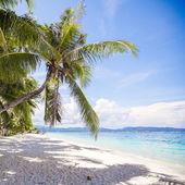 Coconut Palm tree on the white sandy beach — 图库照片