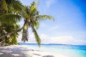Coconut palm tree op het witte zandstrand — Stockfoto