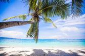 Coconut Palm tree on the white sandy beach — Stock Photo