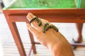 Caterpillar on the hand of a man — Stok fotoğraf