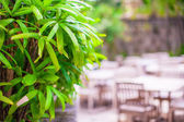 Hotel patio with wooden furniture — Stock Photo