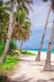 Coconut Palm tree on the sandy beach — Zdjęcie stockowe