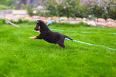 Small puppy mongrel play outdoors — Stock Photo