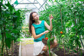 Young woman collects crop cucumbers and tomatos in greenhouse — Stock Photo