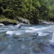 Fast flowing clear blue river, lined with native forest, Milford Sound, Fiordland, National Park, South Island, New Zealand — Stock Photo