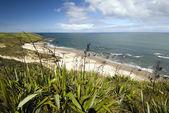 Flax bushes on West coast beach, North Island, New Zealand — Stock Photo