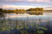 Lily pads and reeds on calm reflected lake, Minnesota, home of 10,000 lakes, USA — Stock Photo