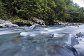 Fast flowing clear blue river, lined with native forest, Milford Sound, Fiordland, National Park, South Island, New Zealand — Stockfoto