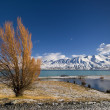 Autumn colors and fresh snow on Lake Pukaki,New Zealand — Stock Photo